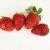 この時期の苺は、旬であっても美味しくはない