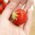 その苺、オランダ産かもしれません。